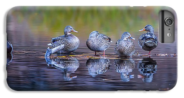 Ducks In A Row IPhone 7 Plus Case by Larry Marshall
