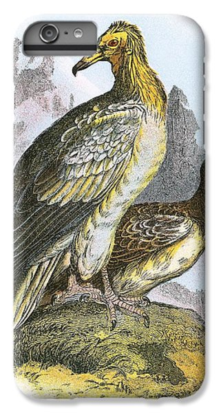 Egyptian Vulture IPhone 7 Plus Case by English School