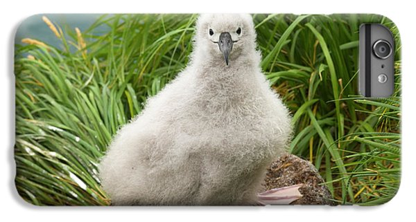 Grey-headed Albatross Chick S Georgia IPhone 7 Plus Case by