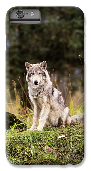 Grey Wolf  Canis Lupus  Pup Roams It S IPhone 7 Plus Case by Doug Lindstrand