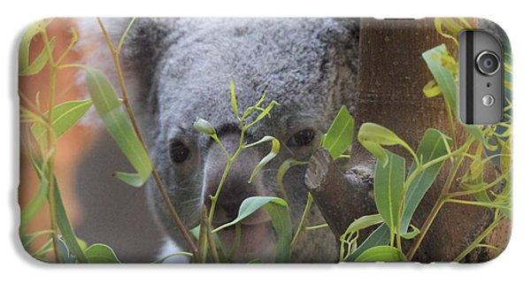 Koala Bear  IPhone 7 Plus Case by Dan Sproul