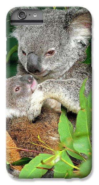 Koalas IPhone 7 Plus Case by Bildagentur-online/mcphoto-schulz