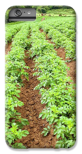 Potatoes Growing At Washingpool Farm IPhone 7 Plus Case by Ashley Cooper