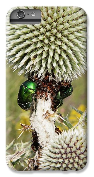 Rose Chafers And Ants On Thistle Flowers IPhone 7 Plus Case by Bob Gibbons