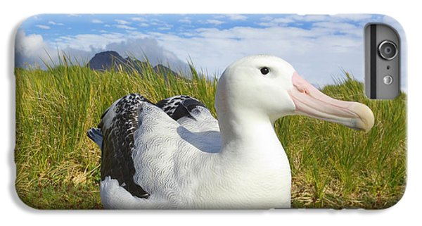 Wandering Albatross Incubating S Georgia IPhone 7 Plus Case by