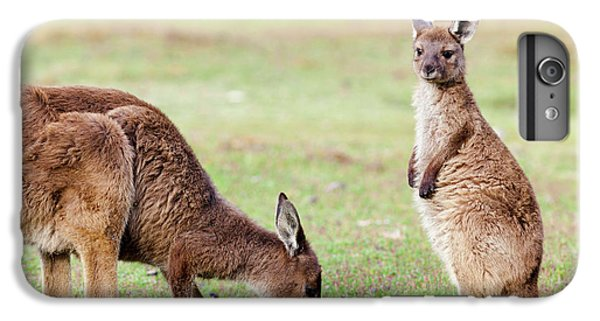 Western Grey Kangaroo (macropus IPhone 7 Plus Case by Martin Zwick