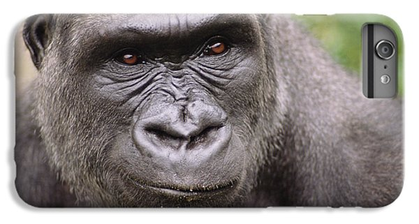 Western Lowland Gorilla Young Male IPhone 7 Plus Case by Gerry Ellis