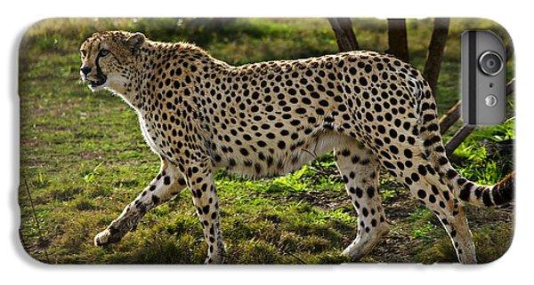 Cheetah  IPhone 7 Plus Case by Garry Gay