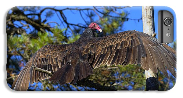 Turkey Vulture With Wings Spread IPhone 7 Plus Case by Sharon Talson