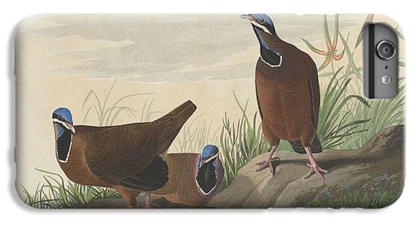 Blue-headed Pigeon IPhone 7 Plus Case by John James Audubon