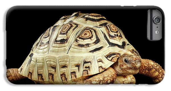 Closeup Leopard Tortoise Albino,stigmochelys Pardalis Turtle With White Shell On Isolated Black Back IPhone 7 Plus Case by Sergey Taran