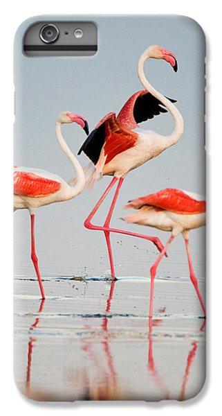 Greater Flamingos Phoenicopterus Roseus IPhone 7 Plus Case by Panoramic Images