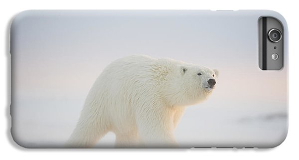 Polar Bear  Ursus Maritimus , Young IPhone 7 Plus Case by Steven Kazlowski