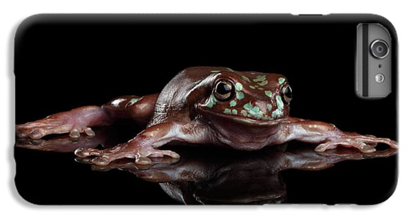 Australian Green Tree Frog, Or Litoria Caerulea Isolated Black Background IPhone 7 Plus Case by Sergey Taran