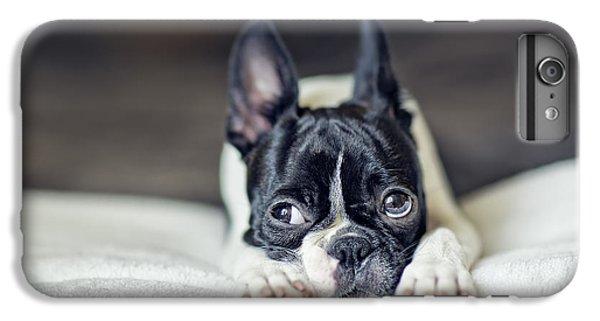 Boston Terrier Puppy IPhone 7 Plus Case by Nailia Schwarz