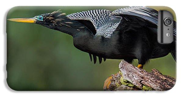 Anhinga Anhinga Anhinga, Costa Rica IPhone 7 Plus Case by Panoramic Images
