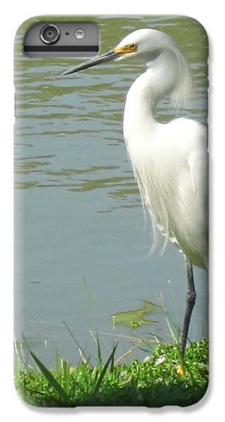 Bird IPhone 7 Plus Case by Sandy Taylor