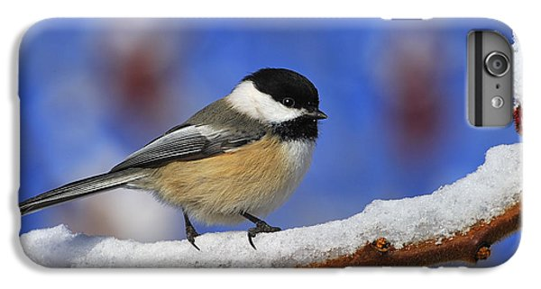 Black-capped Chickadee In Sumac IPhone 7 Plus Case by Tony Beck