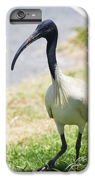 Carpark Ibis IPhone 7 Plus Case by Jorgo Photography - Wall Art Gallery