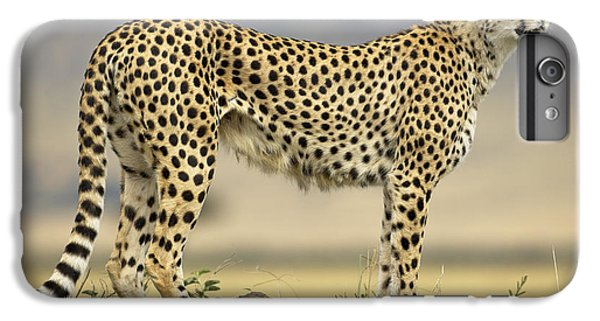 Cheetah Acinonyx Jubatus On Termite IPhone 7 Plus Case by Winfried Wisniewski