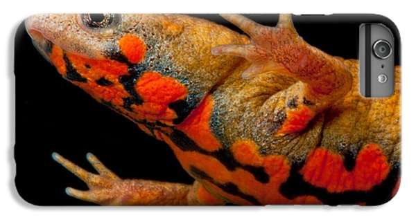 Chuxiong Fire Belly Newt IPhone 7 Plus Case by Dant� Fenolio