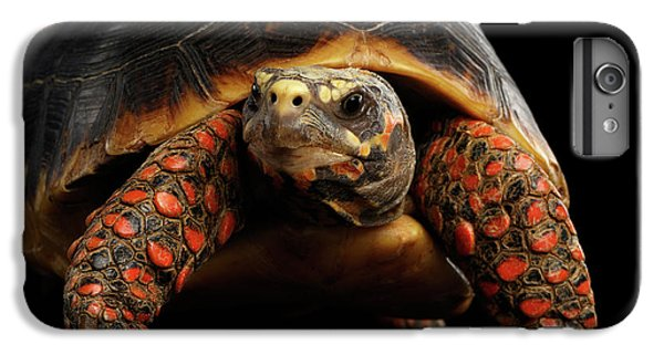 Close-up Of Red-footed Tortoises, Chelonoidis Carbonaria, Isolated Black Background IPhone 7 Plus Case by Sergey Taran