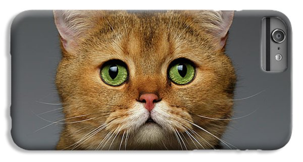 Closeup Golden British Cat With  Green Eyes On Gray IPhone 7 Plus Case by Sergey Taran