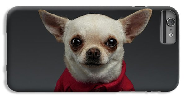 Closeup Portrait Chihuahua Dog In Stylish Clothes. Gray Background IPhone 7 Plus Case by Sergey Taran