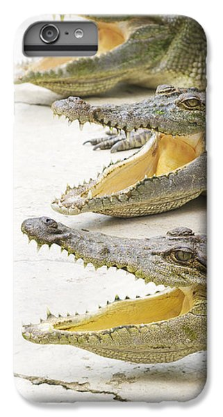 Crocodile Choir IPhone 7 Plus Case by Jorgo Photography - Wall Art Gallery