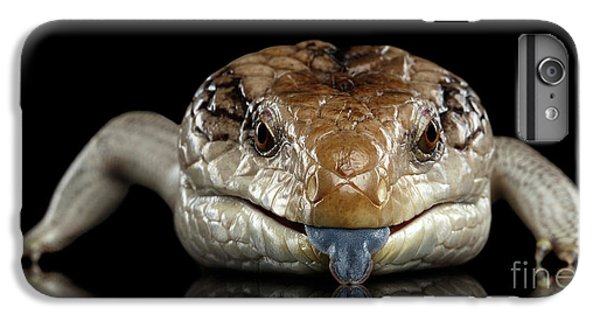 Eastern Blue-tongued Skink, Tiliqua Scincoides, Isolated On Black Background IPhone 7 Plus Case by Sergey Taran