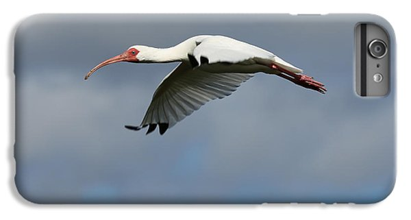 Ibis In Flight IPhone 7 Plus Case by Carol Groenen