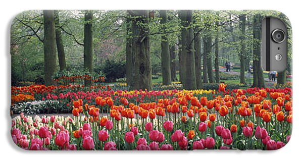 Keukenhof Garden, Lisse, The Netherlands IPhone 7 Plus Case by Panoramic Images