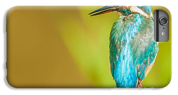 Kingfisher IPhone 7 Plus Case by Paul Neville