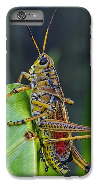 Lubber Grasshopper IPhone 7 Plus Case by Richard Rizzo