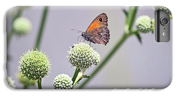 Perched Butterfly No. 255-1 IPhone 7 Plus Case by Sandy Taylor