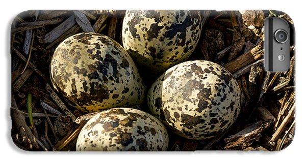 Quartet Of Killdeer Eggs By Jean Noren IPhone 7 Plus Case by Jean Noren