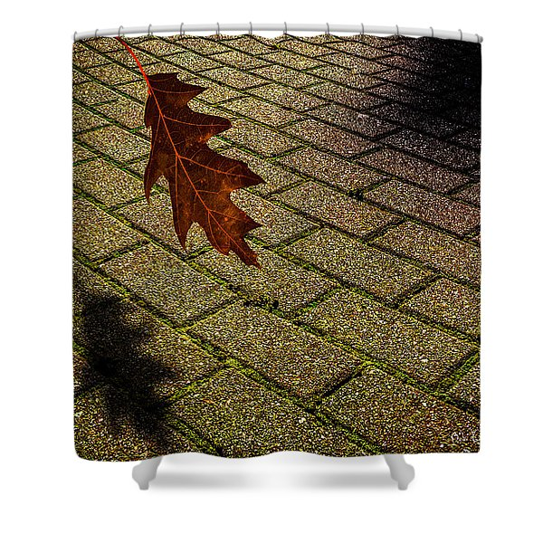 autumnal equinox Shower Curtain by Bob Orsillo
