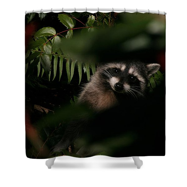 I Can See You  Mr. Raccoon Shower Curtain by Kym Backland