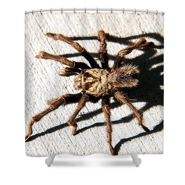 Tarantula Shower Curtain by Robert Bales