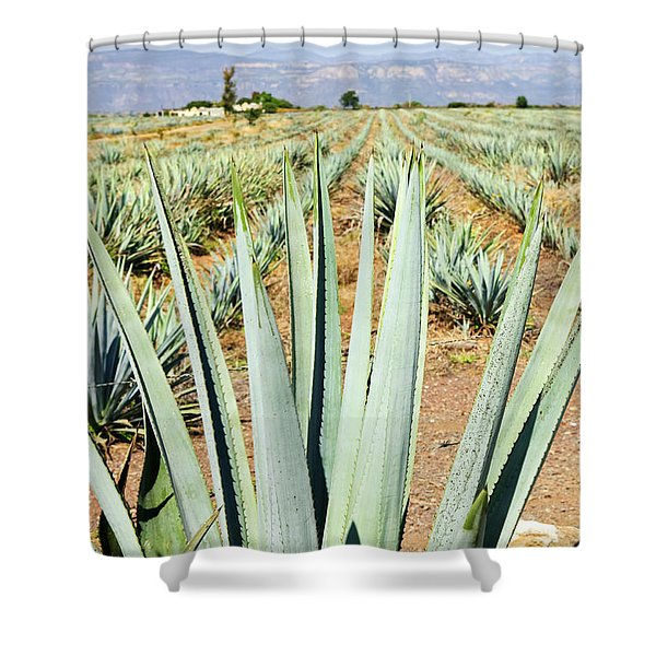 Agave cactus field in Mexico Shower Curtain by Elena Elisseeva