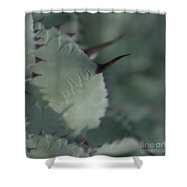 Agave parryi truncata - Artichoke Agave - Cactus and Succulents  Maui Hawaii Shower Curtain by Sharon Mau