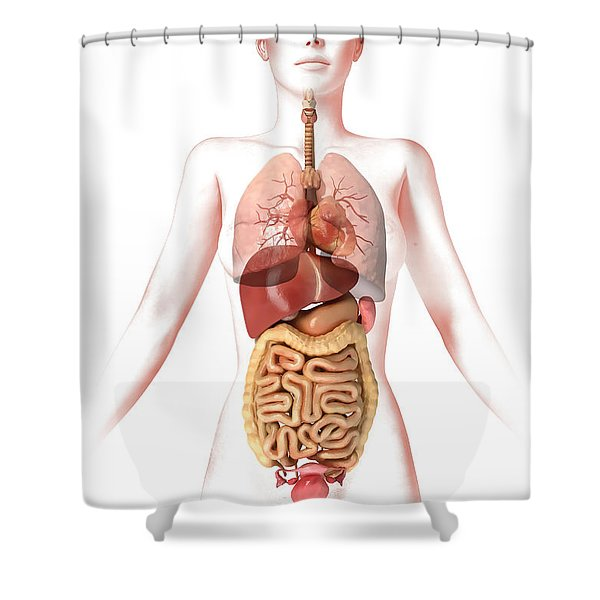 Anatomy Of Female Body With Internal Shower Curtain by Leonello Calvetti