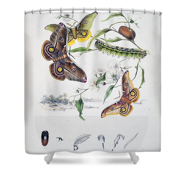 Australian Butterflies Shower Curtain by Philip Ralley