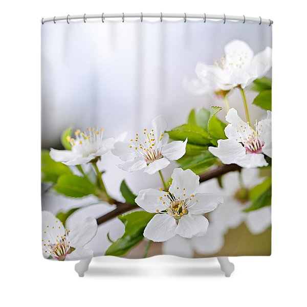 Cherry blossoms Shower Curtain by Elena Elisseeva