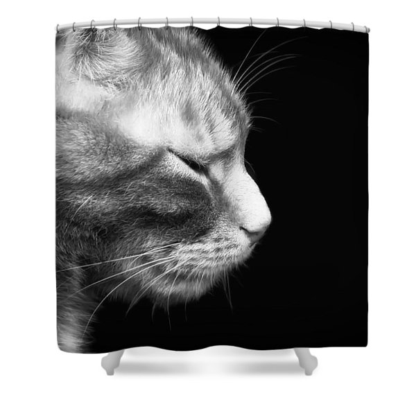 Just A Catnap Shower Curtain by Mountain Dreams
