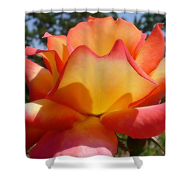 Rainbow Sorbet Rose Close Up Shower Curtain by Denise Mazzocco