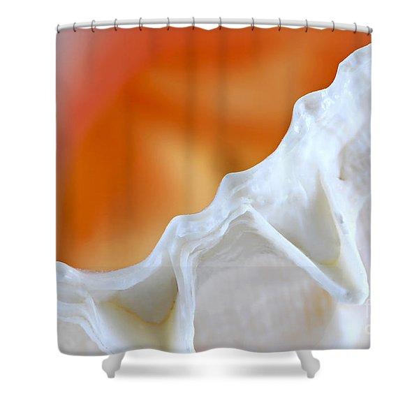 Seashell detail Shower Curtain by Elena Elisseeva