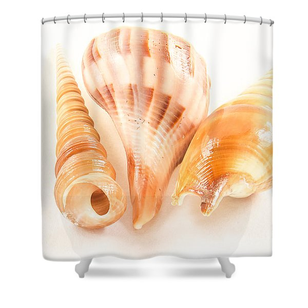Shell Trio Shower Curtain by Jean Noren