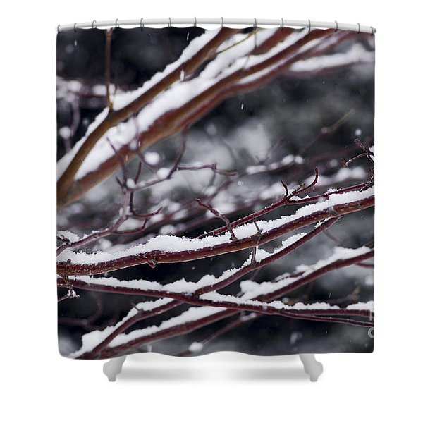 Snowfall and tree Shower Curtain by Elena Elisseeva