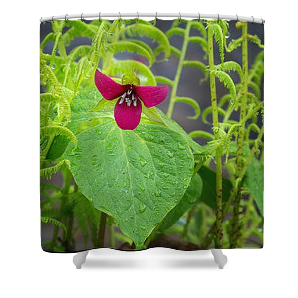 Spring Shower Curtain by Bill  Wakeley